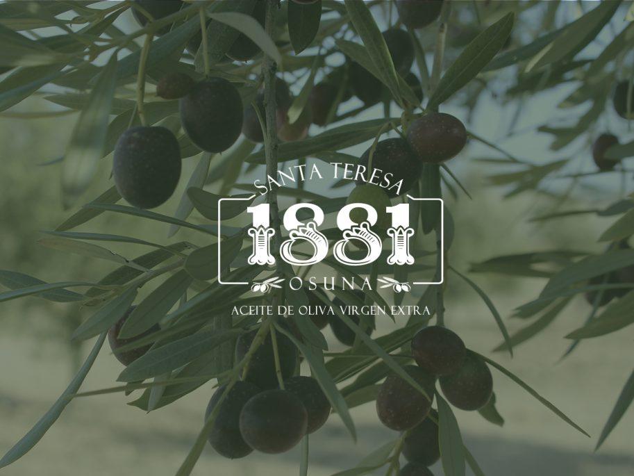 ¿Qué cantidad de aceite se puede extraer de un olivo?