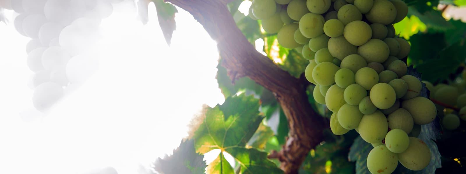 Vinagre con denominación de origen Jerez - Aceite de Oliva 1881